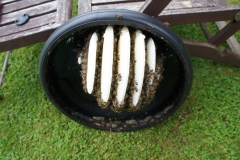 2 Compost Lid colony
